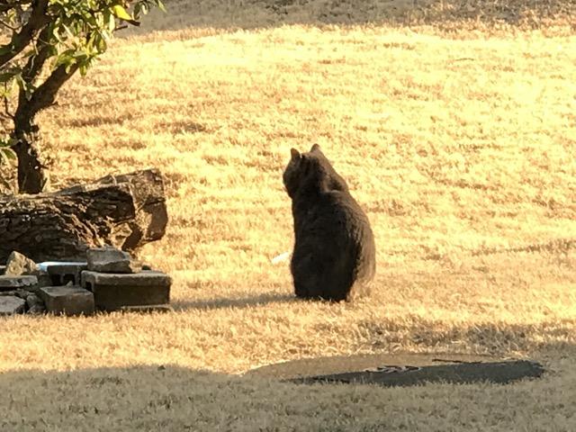 ほのぼのと日向ぼっこをしているノラ猫ちゃんが可愛かったので少しだけアピールして邪魔してみた